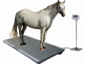 PS3000 Rubber Mat with Horse_907x768